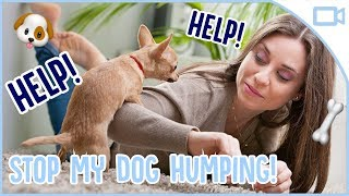 How to Stop Your Dog Humping!