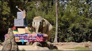 Zoológico y familias festejan los 57 años de la elefante Trompita