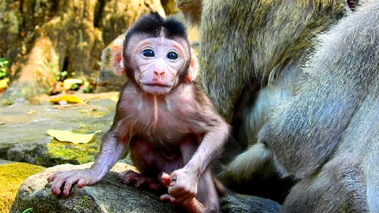 Image result for Monkeys Are Cute But They Bite