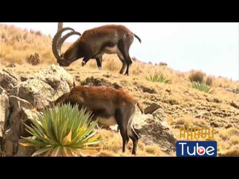 Ethiopia - The Simien Mountains National Park