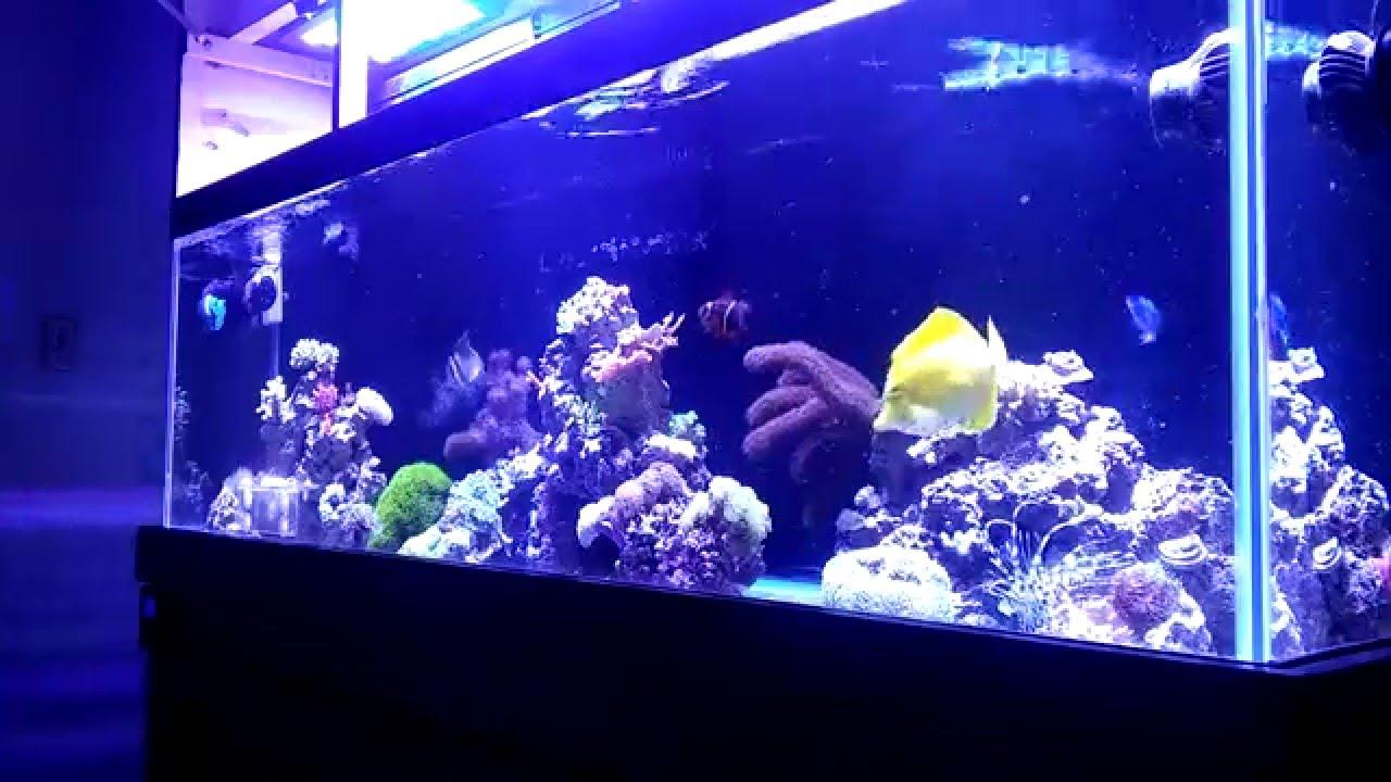 Feeding A Snowflake Eel Beginner Guide To Saltwater Aquariums Youtube