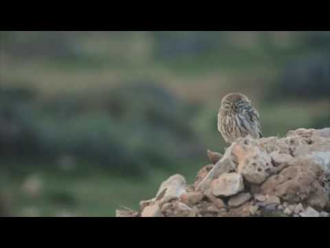 Birdwatching Souss Massa, Morocco
