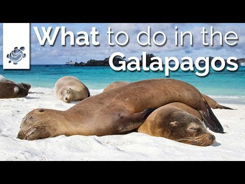 What to do in the Galapagos?
