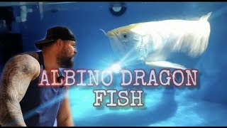 NEW SHIPMENT *UNBOXING* ALBINOS & EXOTIC FISH FROM ASIA