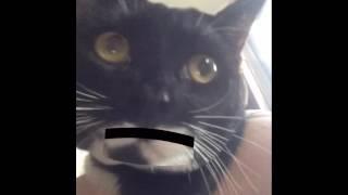 cats against Trump