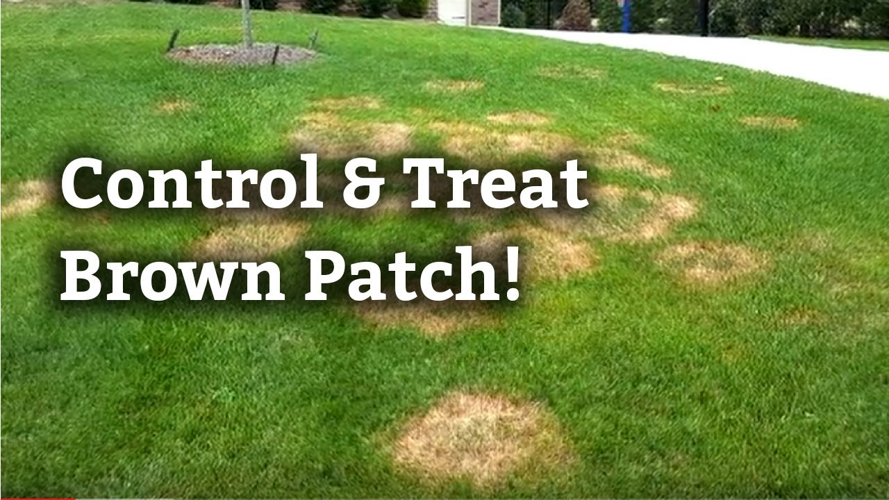Brown Patch Disease Spring Green Lawn Care Guide
