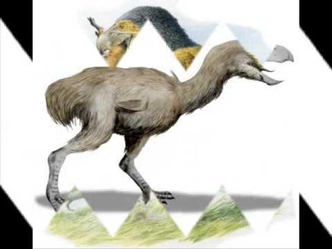 Dino Profile - Phorusrhacos Longissimus (Ep. 6)