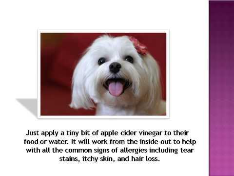 Apple Cider Vinegar Dog Ear Flush