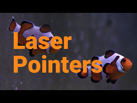 Clownfish & Laser Pointers - It's Clown Fish Scicomm Time With Our Reef Aquariums!