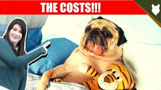 COST OF OWNING PUG