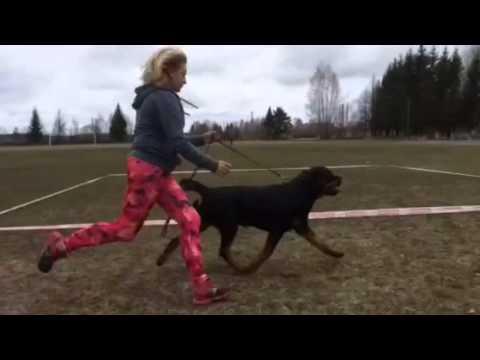 Training 2015 Alfa Profi Viking unofficial video