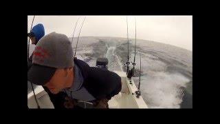 BIG King Salmon on Lake Michigan GoPro