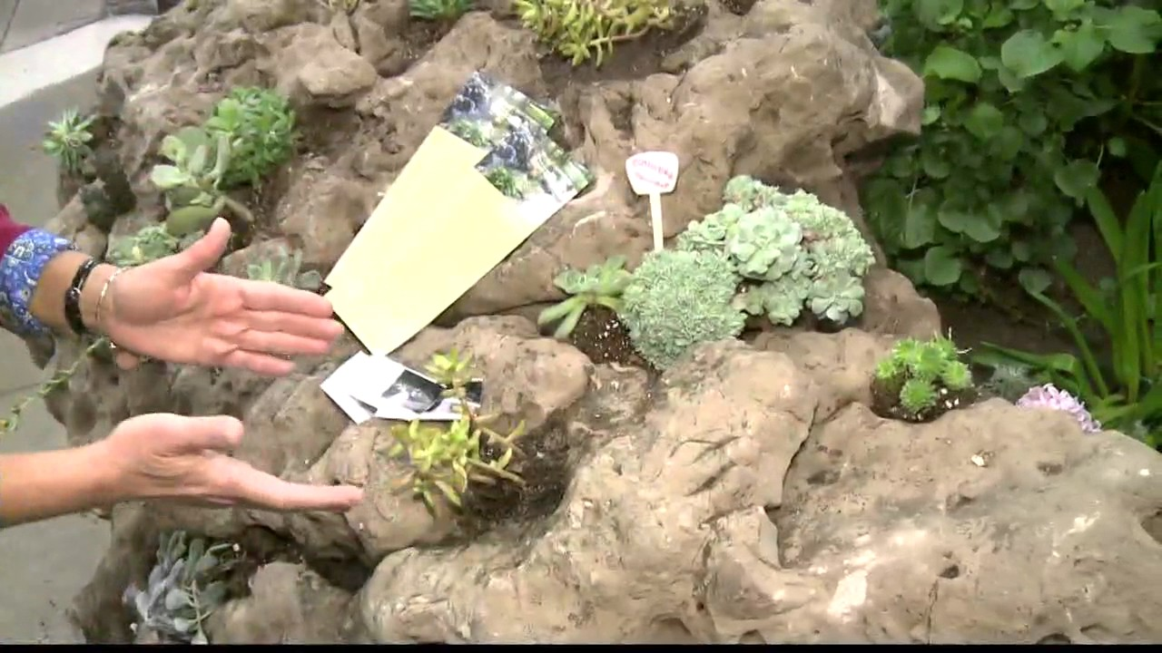 2 The Garden Planting Succulents In Old Rocks Youtube