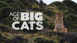 Age of Big Cats: 30-second trailer
