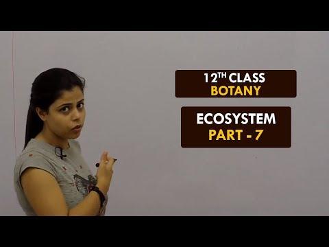 Botany - XII || Ecosystem - Part7 || Nutrient Cycling || Rishika Revo || Hindi