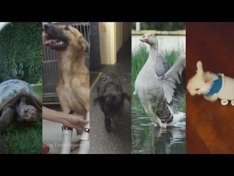 2016 Year In Review: Rescue Animals Who Got a Little Help From Science