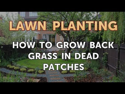 How to Grow Back Grass in Dead Patches