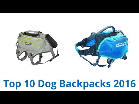 10 Best Dog Backpacks 2016