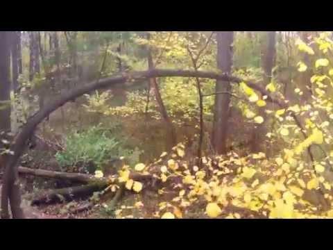 Психоделичный пролет сквозь лес