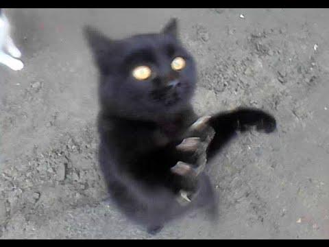 Приколы.Черные кошки. The Gags.Black Cats.