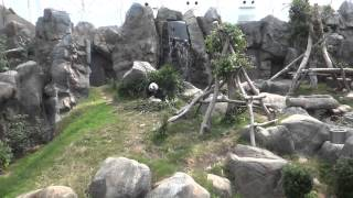 Lazy Panda at OceanPark Hongkong
