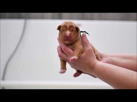 Deseree's Puppies Present: Introduction Week 1