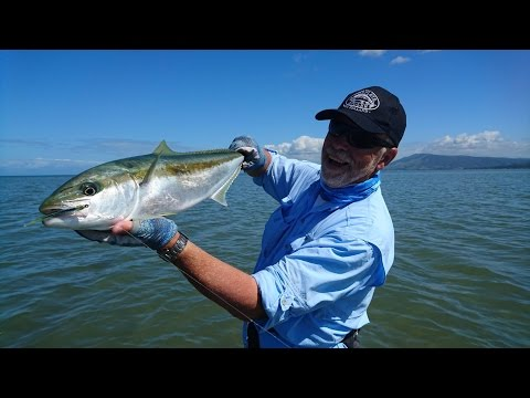 How To Catch Kingfish On The Fly - Complete Angler