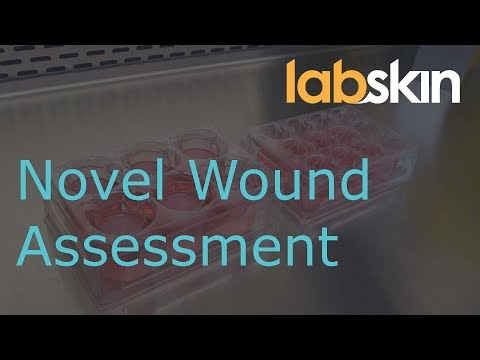 Novel Wound Assessment in Living Skin Equivalents