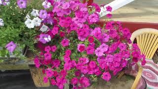 Есть идея! Как разместить горшки с цветами и овощами в моем  маленьком саду !