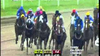 Vidéo de la course PMU PREMIO NEUROLOGO