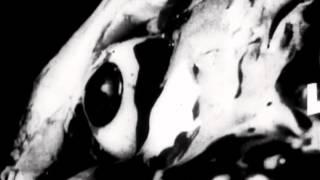 La Noche de los Muertos Vivientes. Ultracuerpos