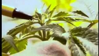 02 2 Inizio di una coltivazione indoor