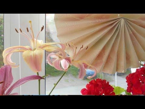 Защита комнатных цветов от солнца