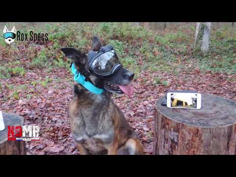Maitre de chien : K9VS System Recorder wifi:4G