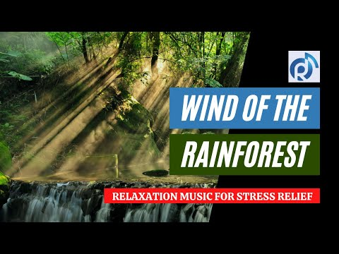 Wind of the Rainforest | Relaxation Music for Stress Relief, Calm and Sleep