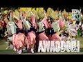 阿波踊りの「さゝ連」 自由奔放で華麗 Sasa-ren - Graceful Dancers