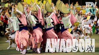しなやかな女踊りと、腰を低く落として進む男踊りが特徴の「さゝ連」。...