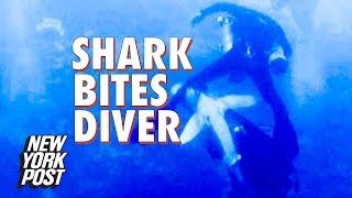 Shark bites diver in horrifying shark attack caught on camera | New York Post