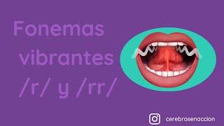 Fonemas vibrantes /r/ y /rr/
