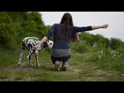 Dog Tricks by Dalmatian Yuma 2