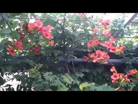 Обои Zambaiti Parati Satin Flowers New 41
