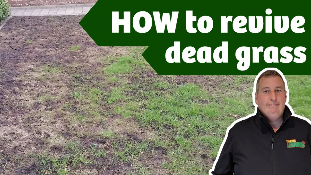 Why is my lawn dying in patches | Leatherjackets, what are they and how to kill them.