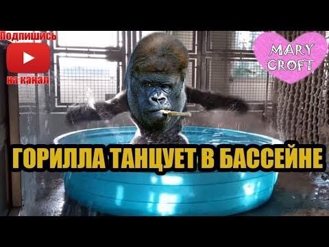 ГОРИЛЛА ТАНЦУЕТ В БАССЕЙНЕ / ПОКОРИЛА СЕРДЦА МИЛЛИОНОВ