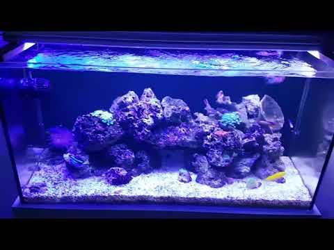 Deniz Akvaryum Temizliği Nasıl Yapılır