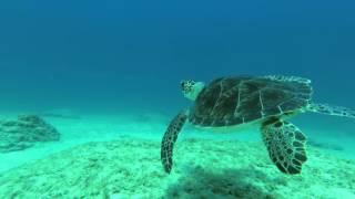 2015.09 Turtle Dive in Protaras, Cyprus