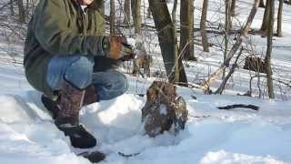 How can you Help me coyote Trap?