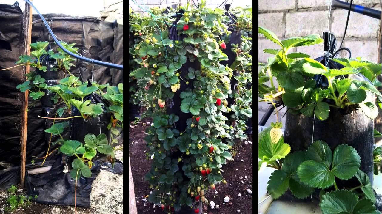 hidroponia vertical de fresas decoragro 2013 youtube