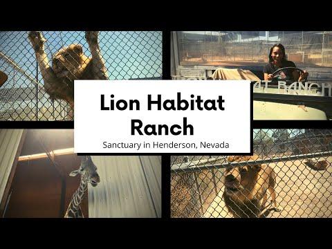 Vlog   Lion Habitat Ranch Sanctuary Near Las Vegas