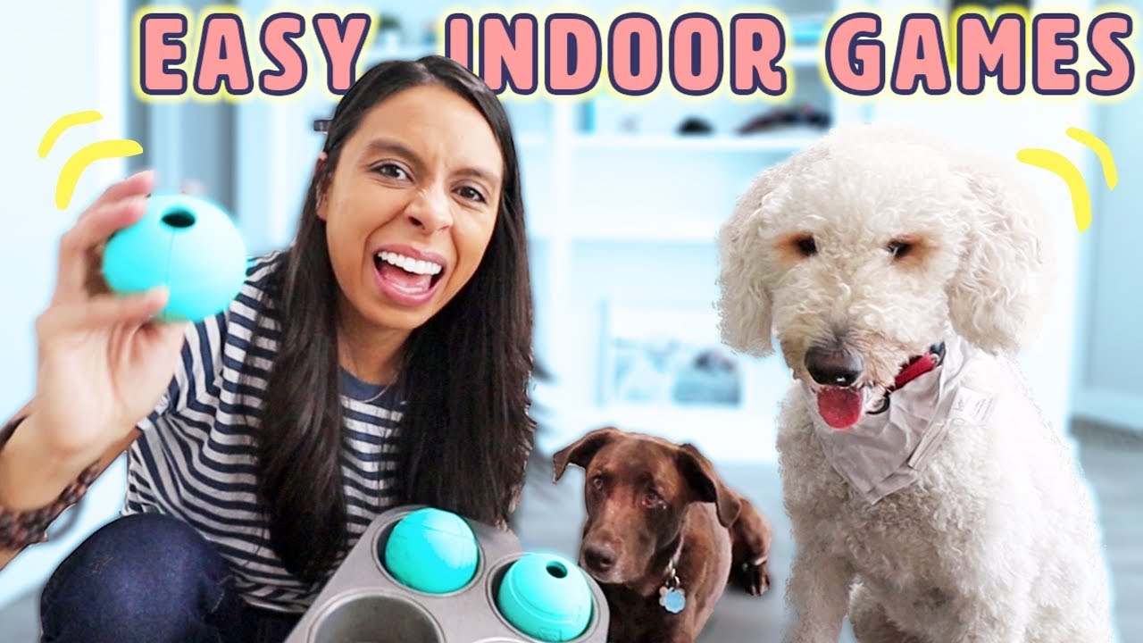Indoor Games for You & Your Pup!