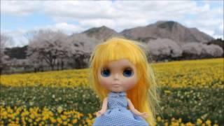 旅する人形ブライスと岩井親水公園に 桜並木と水仙でブライス人形を撮影.